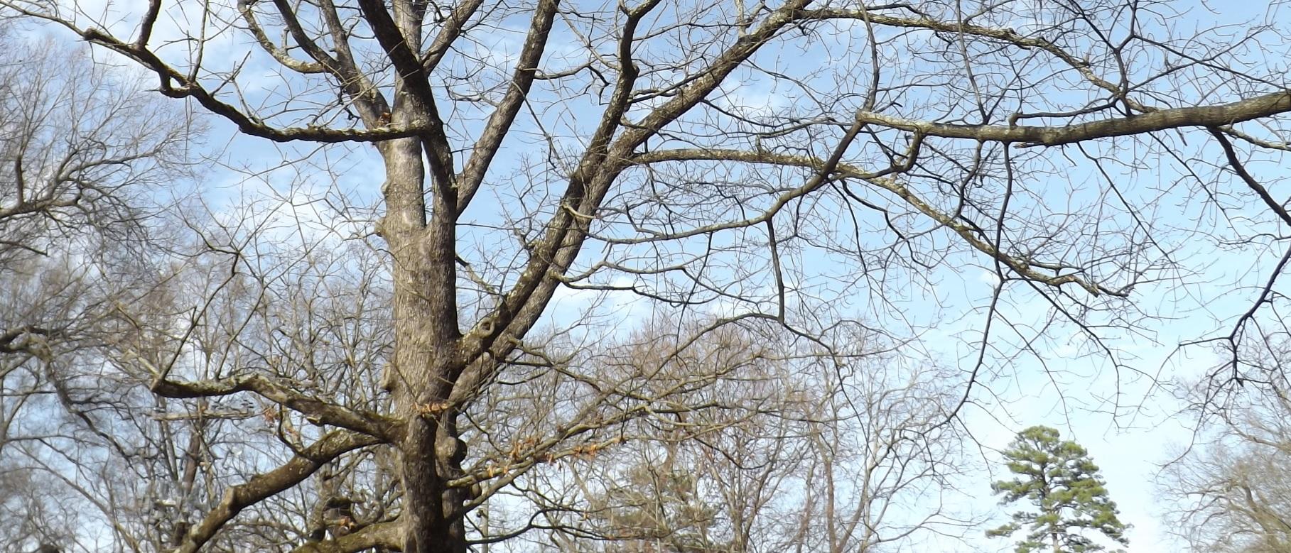 tree8786.jpg