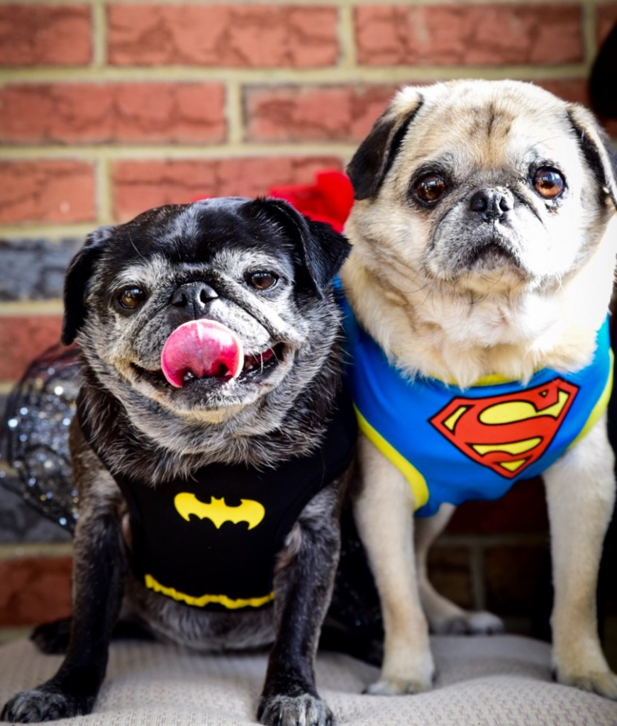 Dogs dressed as superheroes for Halloween.