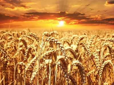 agriculture-cereals-clouds-39015.jpg