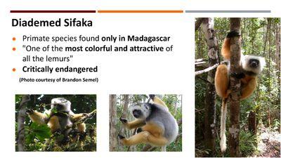 Discovery Lemur_Page_05.jpg